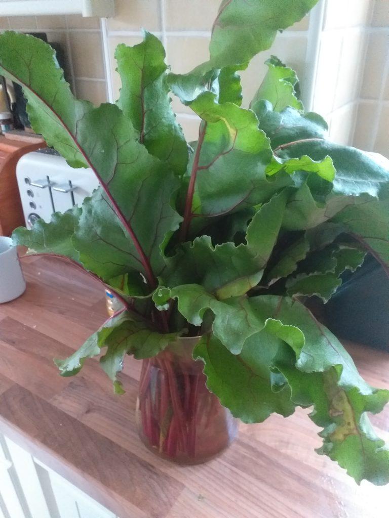 Beetroot leaves looking like flowers in a vase